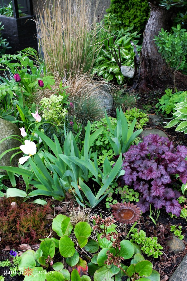 Perennials in the home garden