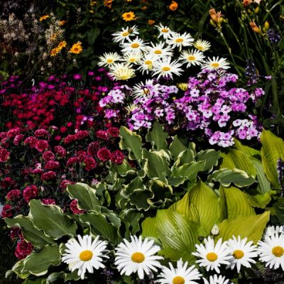 The Ultimate Perennial Gardening Resource Guide