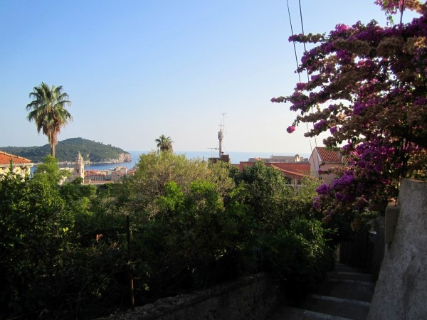 view from the garden