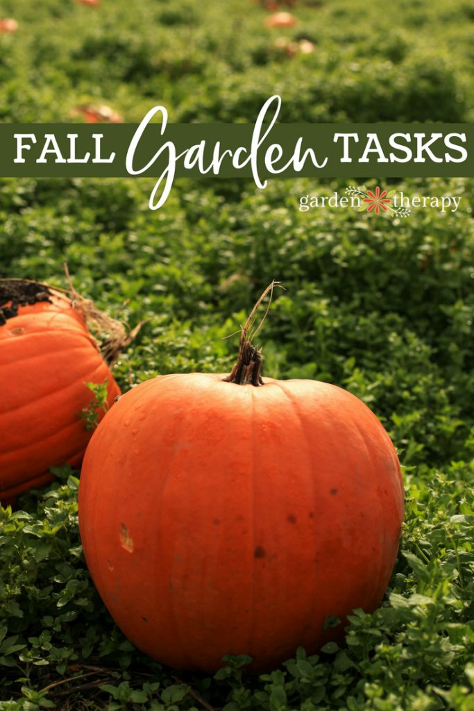 "two pumpkins in a garden with copy ""fall garden tasks"""