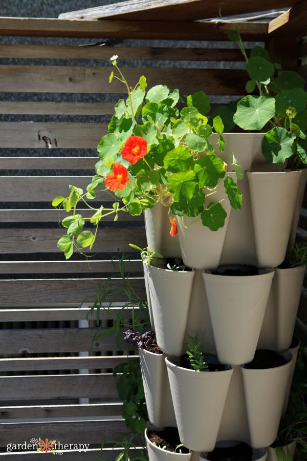 Greenstalk Vertical Garden planted with nasturtiums