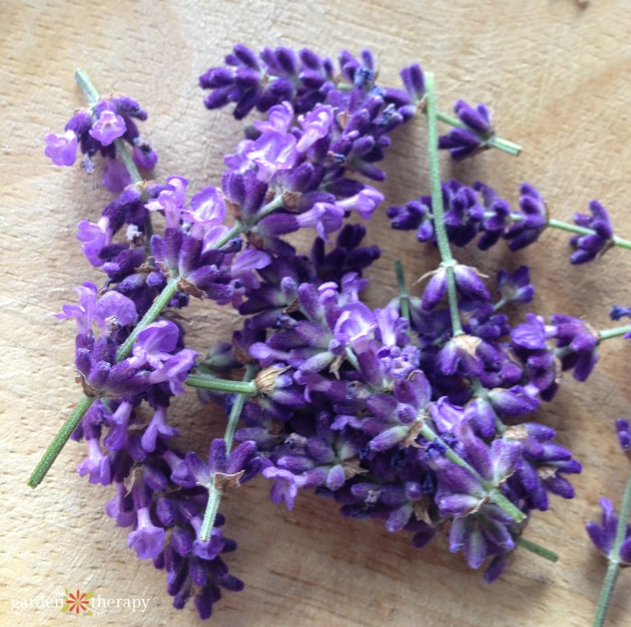 lavender buds for simple syrup