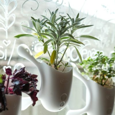 Say Goodbye to the Winter Blues with a DIY Window Herb Garden