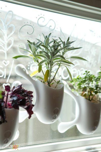herbs growing in livi pots