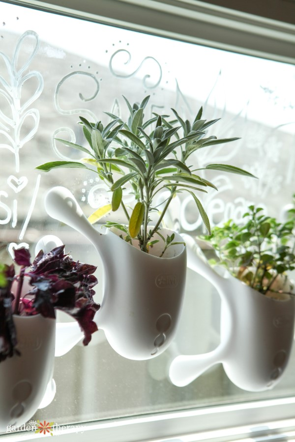 herbs growing in livi pots