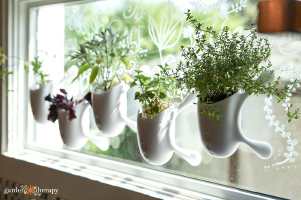 window herb garden kit