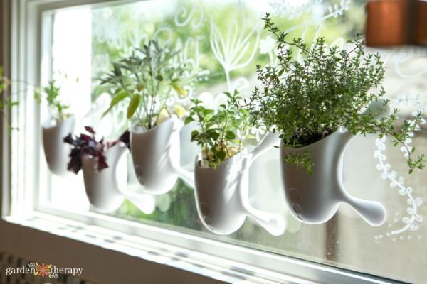 window herb garden kit