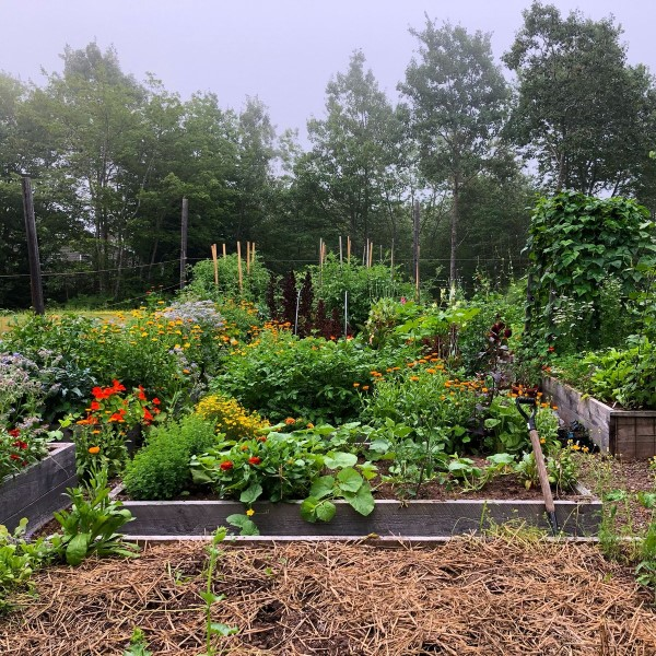 Niki Jabbour's vegetable garden