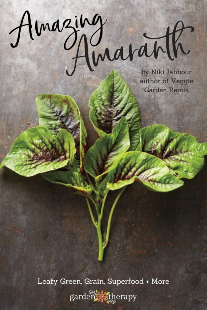 "A bunch of amaranth leaves on a gray background with copy ""Amazing Amaranth"""