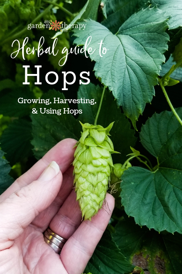 "Hops flower with copy ""Herbal Guide to Hops: Growing, Harvesting, and Using Hops"""