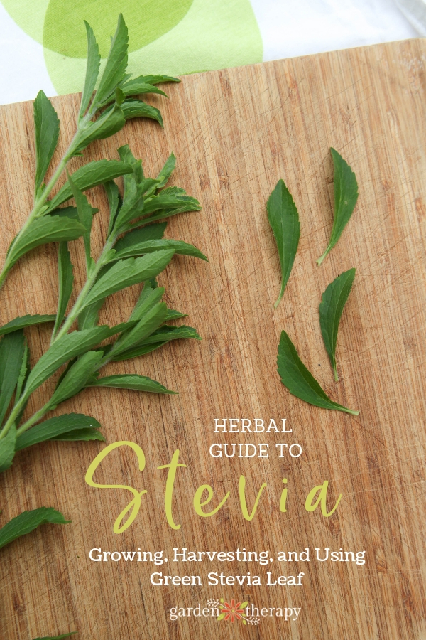 "Fresh stevia sprigs on a wooden background with copy ""Herbal Guide to Stevia: Growing, Harvesting, and Using Green Stevia Leaf"""
