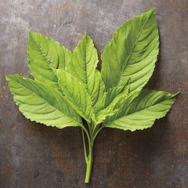 green amaranth leaves