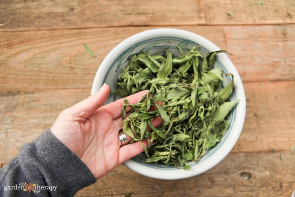 Hand lifting dried stevia leaves out of a bowl