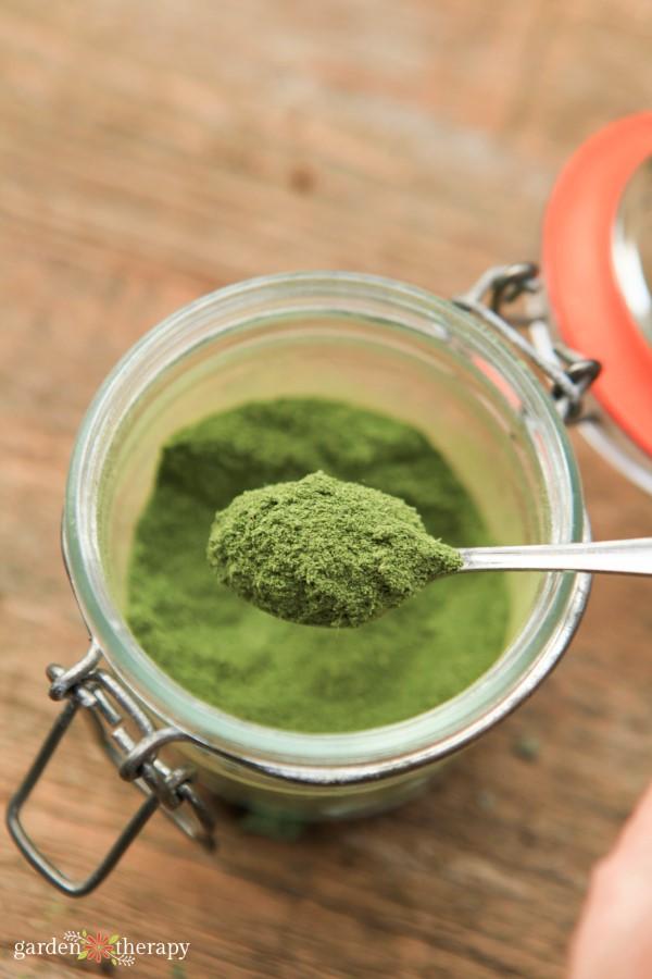 a spoonful of dried stevia leaf powder
