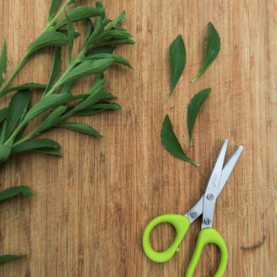 Herbal Guide to Stevia Leaf: How to Grow, Harvest, and Prepare Green Stevia
