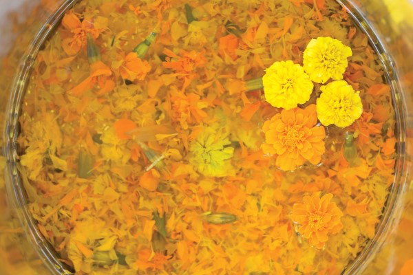 marigolds simmering in a dye bath