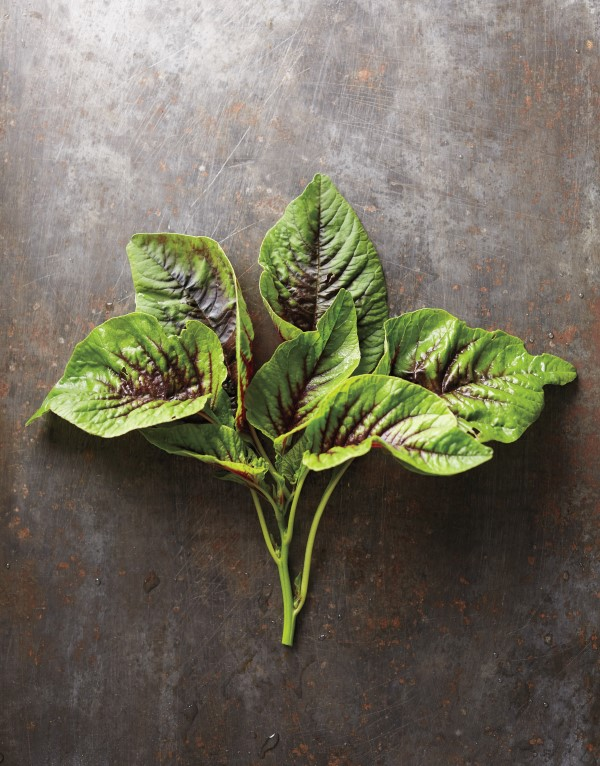 Variegated amaranth leaves