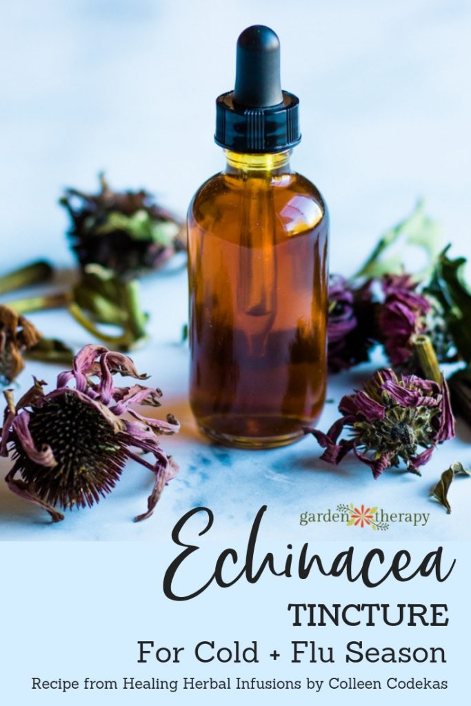Echinacea Tincture for Cold and Flu Season
