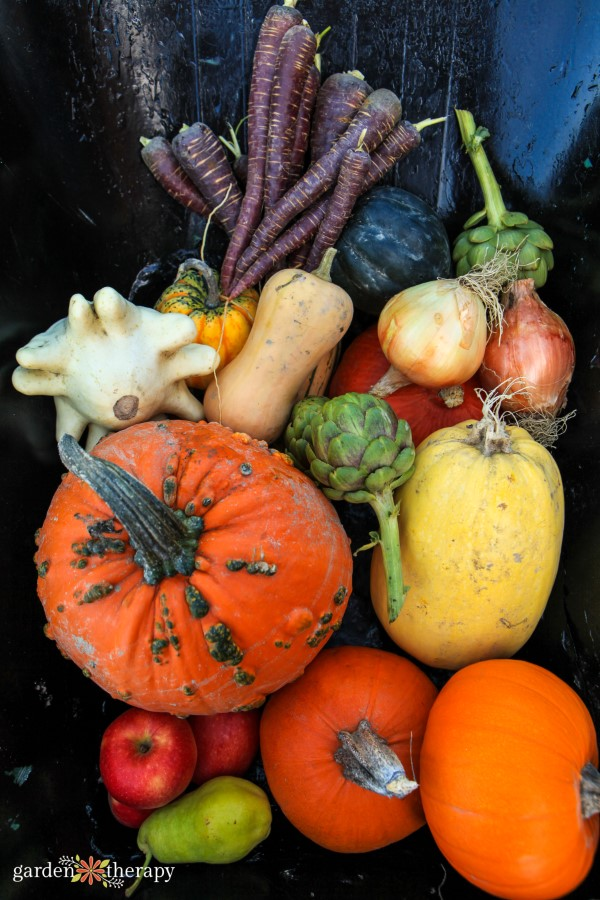 Fall garden Harvest of Pumpkins artichoke squash carrot
