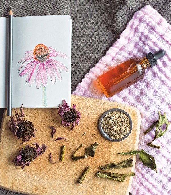 echinacea medicinal tincture with ingredients and illustration of a coneflower