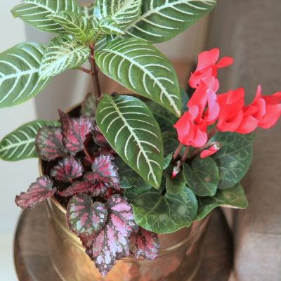 Houseplants that are Poisonous to Pets: How to Keep Your Fur Babies Safe