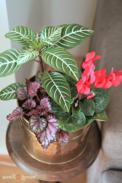 Houseplants to keep away from pets