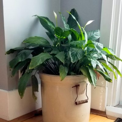 The Everything Guide to Watering Houseplants