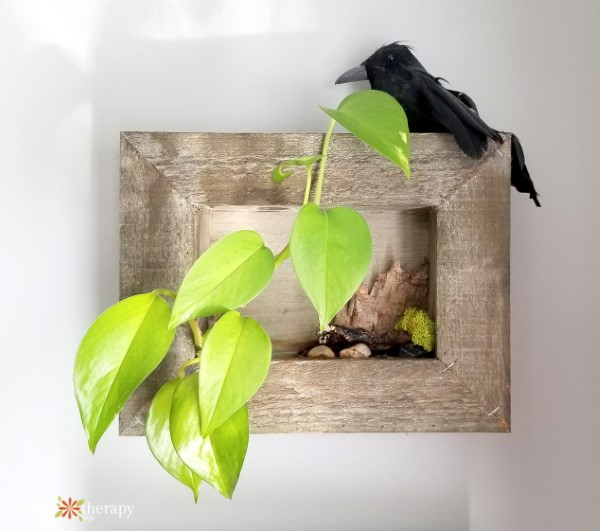 houseplants in a wooden frame