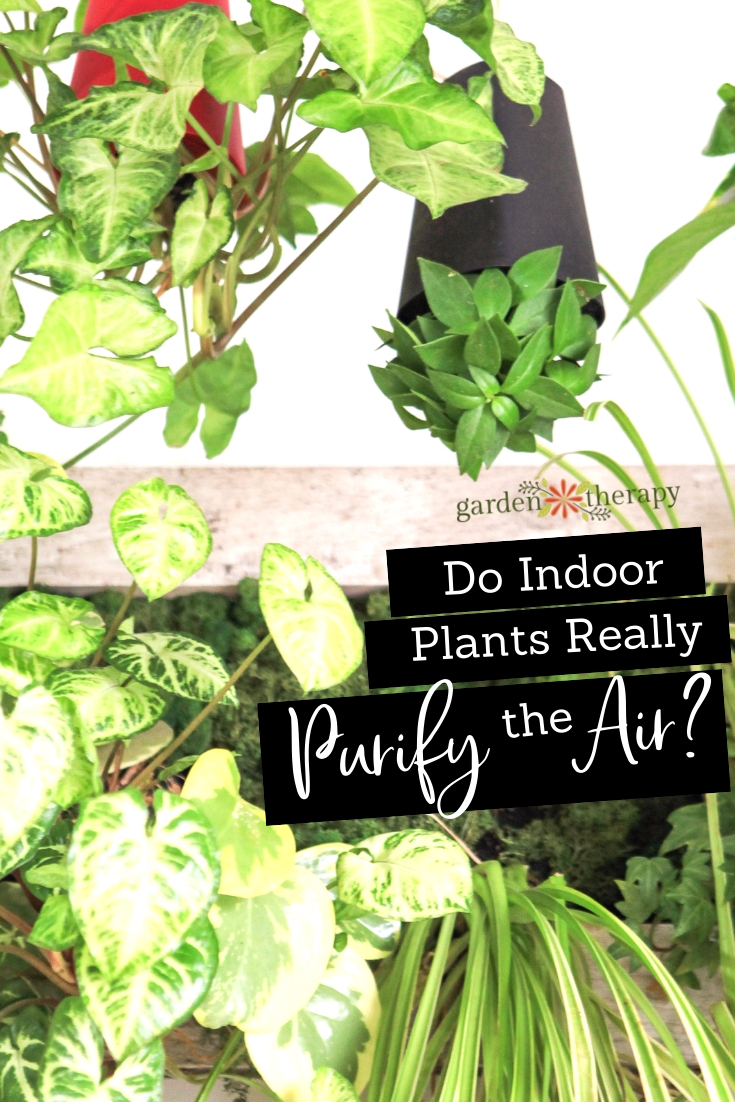 Do Indoor Plants Really Purify the Air?