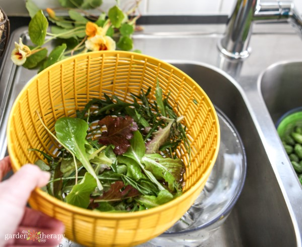 greens in a salad spinner