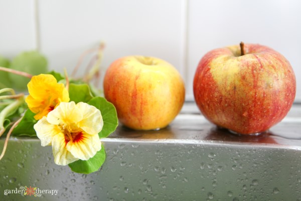 Apples and nasturtiums on the side of a kitchen sink, ready for washing