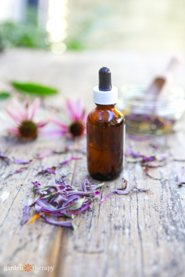 echinacea root tincture with dried echinacea petals