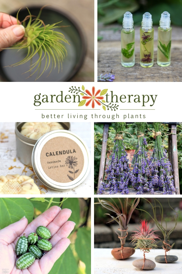 Garden Therapy Best of 2018