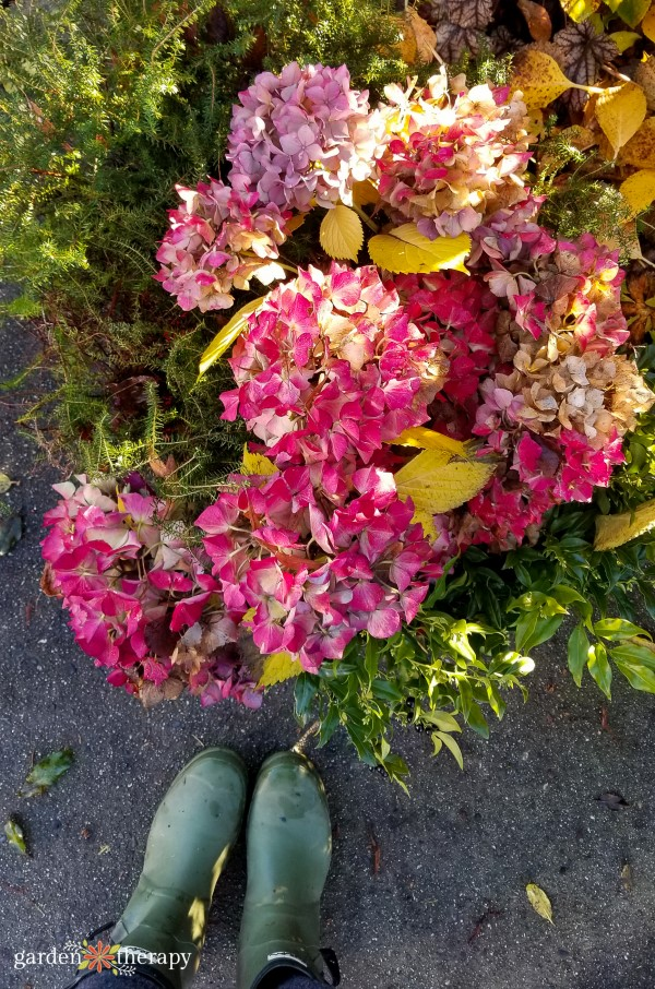 Harvesting Hydrangeas for Wreaths