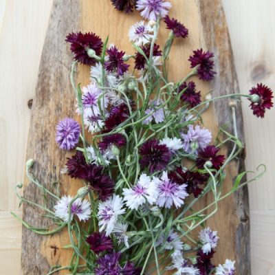 Common Garden Herbs for a Skin Care Apothecary