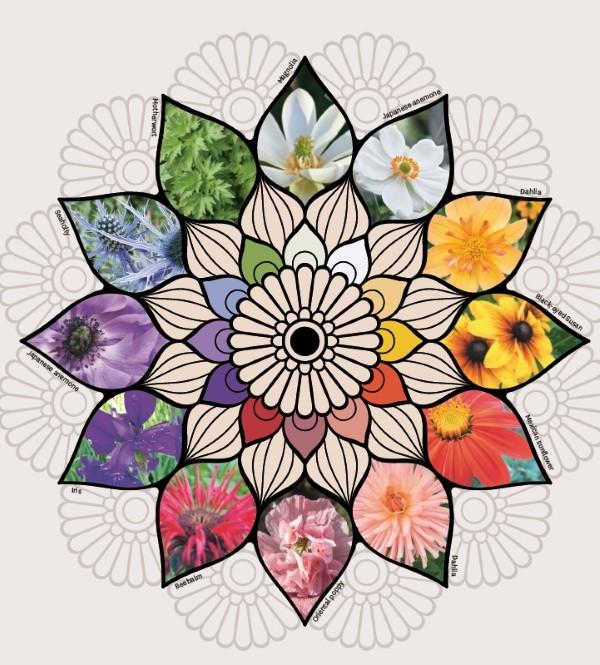 Flower Mandala Illustration Jesse Bloom Creating Sanctuary