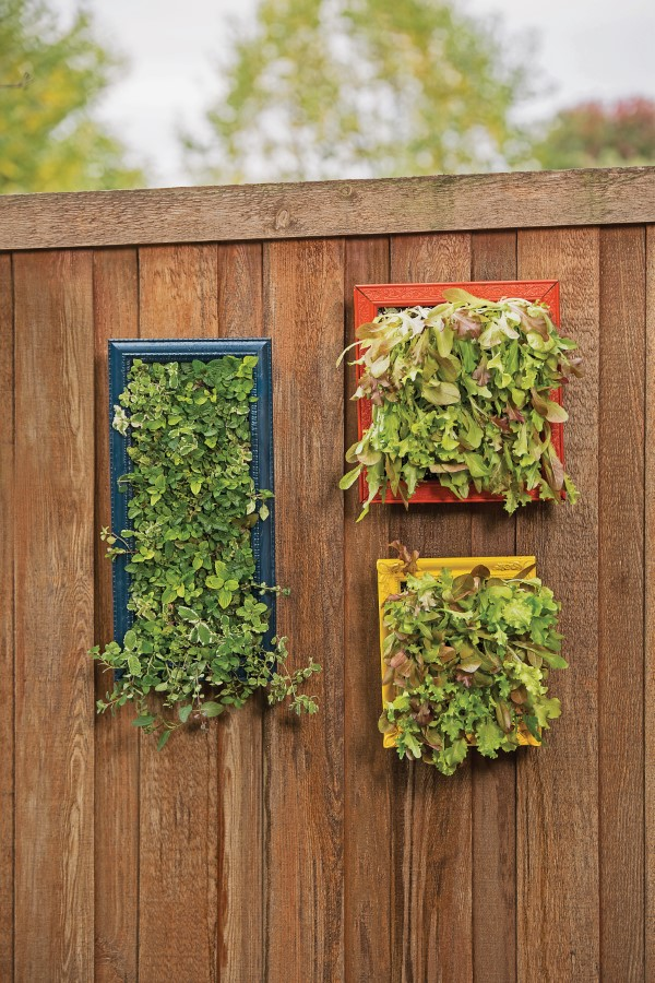Mint and Lettuce Vertical Herb Garden Wall Ar
