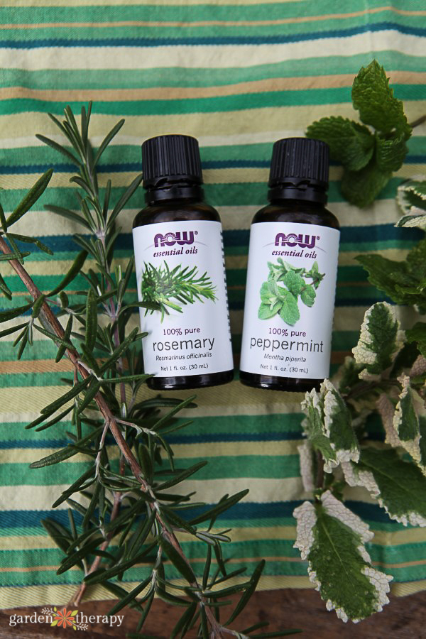 Rosemary and peppermint essential oils