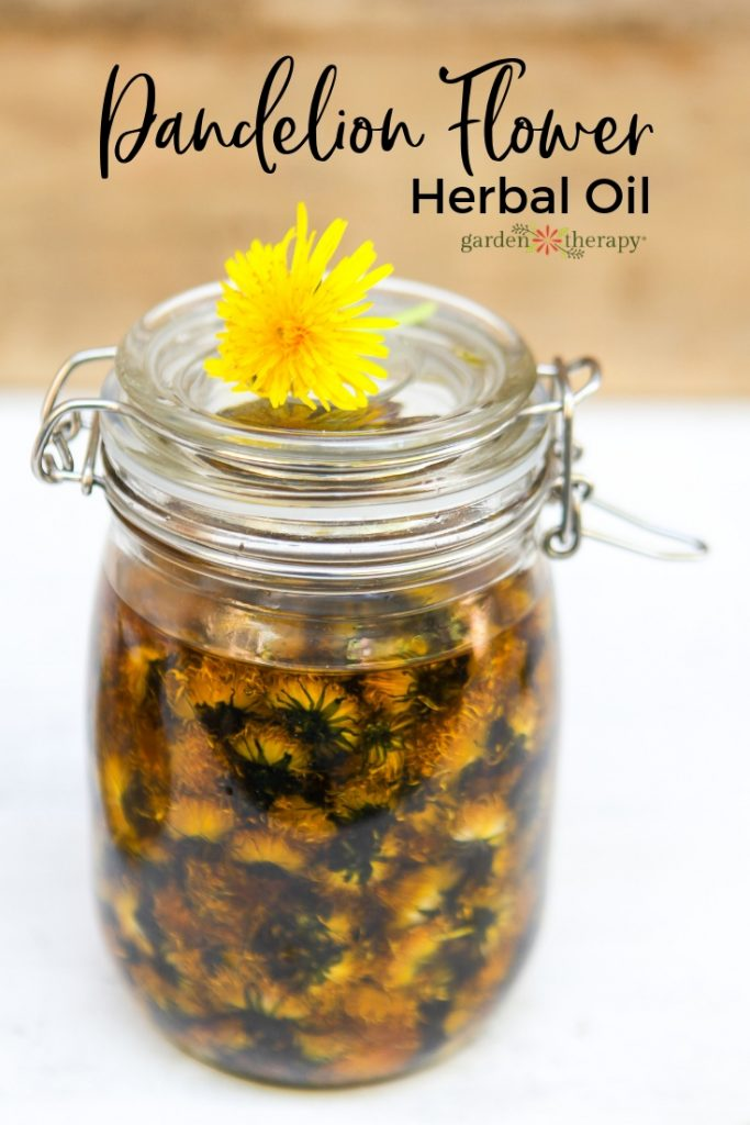 Dandelion Flower Herbal Oil Using the Cold-Infusion Method