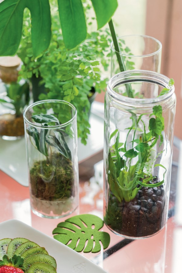 Glass Moss terrariums Living Decorphoto by Alcides Aguasvives