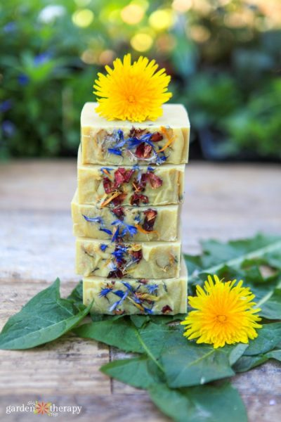 Dandelion Soap Recipe