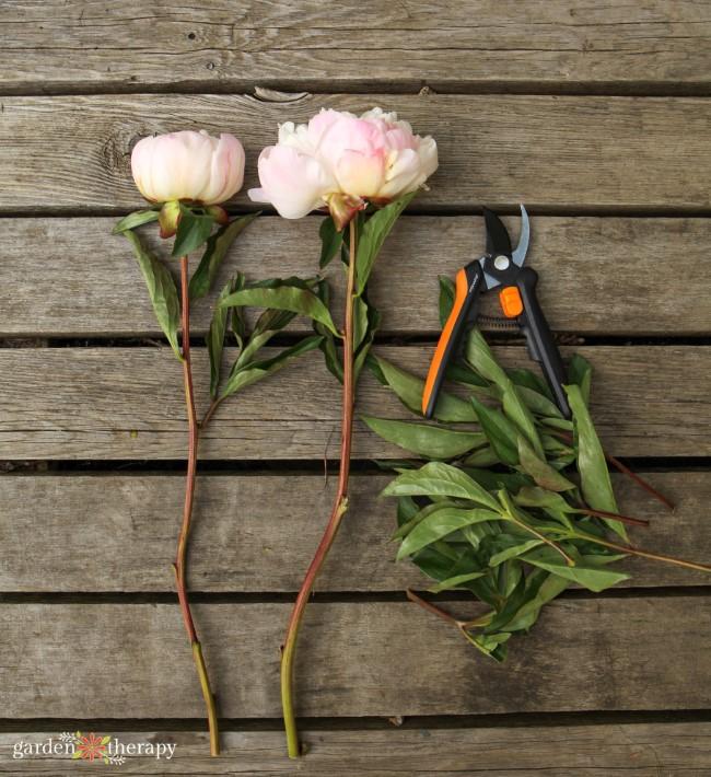 Fiskars Flower Pruner with Peonies