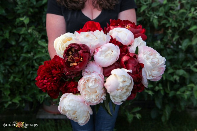 Holding a huge bouquet of peonies
