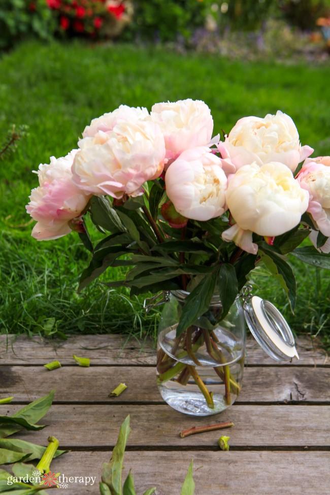 Pink Peony arrangement in a jar