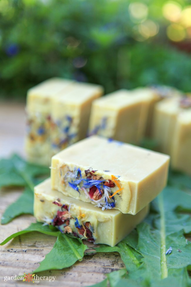 bars of fresh wildflower soap on dandelion greens