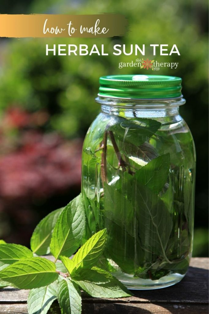 _How to Make Sun Tea