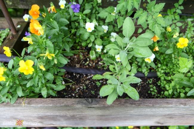 Flat Soaker Hose in Garden