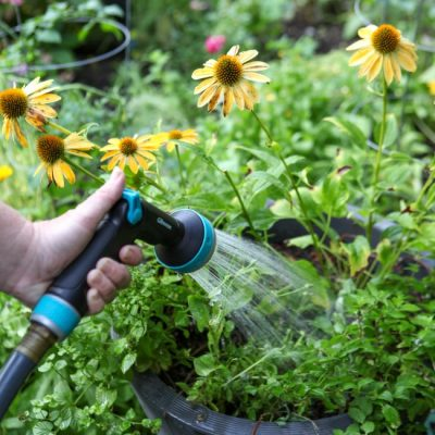 Mindful Garden Watering: Balancing Water Use and Conservation