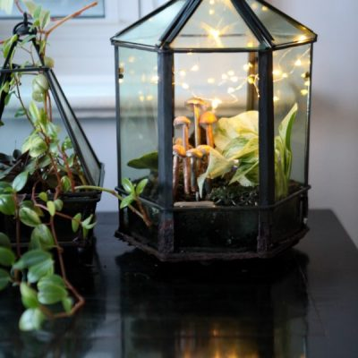 Indoor Plant Care: How to Grow Tropical Plants in Geometric Terrariums