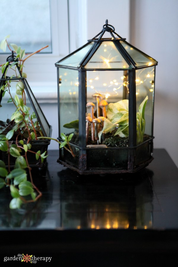 Terrarium lit with fairy lights and filled with tropical plants and clay mushrooms